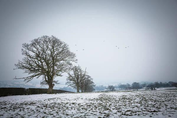 Photograph - Snowy Field by Raelene Goddard