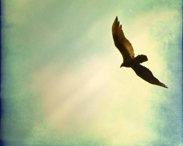 Wall Art - Photograph - Soaring by Amy Tyler