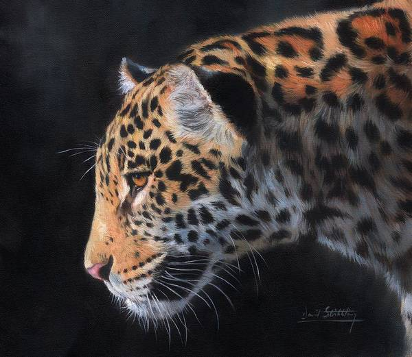 Jaguar Painting - South American Jaguar by David Stribbling