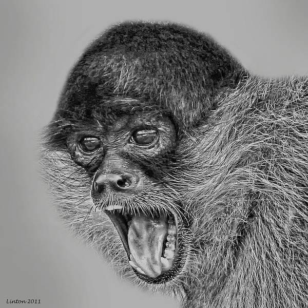 Digital Art - Spider Monkey 2 by Larry Linton