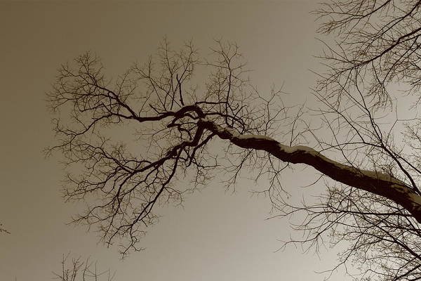 Photograph - Spooky Gnarly Forest by Frank Romeo