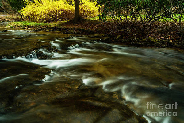 Photograph - Spring Along Anthony Creek by Thomas R Fletcher