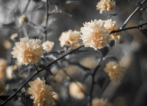 Photograph - Spring Is In The Air by Miguel Winterpacht