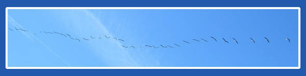 Photograph - String Of Birds In Blue by Mary Mikawoz