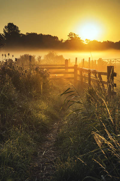 English Countryside Photograph - Stunning Sunrise Landscape Over Foggy English Countryside With G by Matthew Gibson