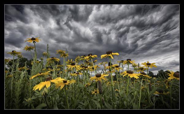 Coneflowers Photograph - Summer Storm by Robert Fawcett
