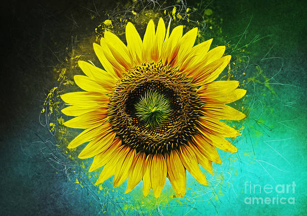 Bright Flowers Mixed Media - Sunflower by Ian Mitchell