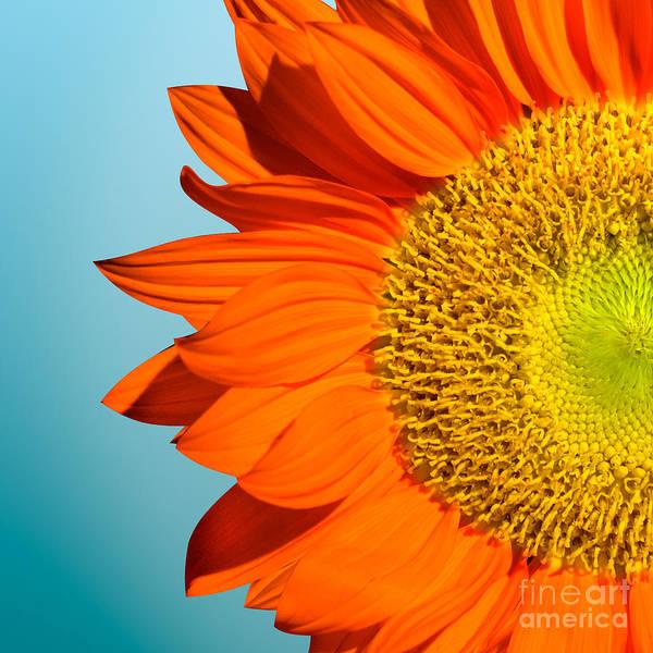 Yellow Rose Photograph - Sunflowers by Mark Ashkenazi