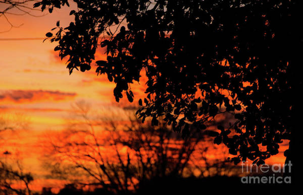 Photograph - Sunset by Andrea Anderegg