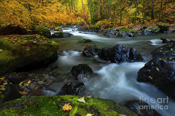 Wall Art - Photograph - Surrounded By Autumn by Mike Dawson