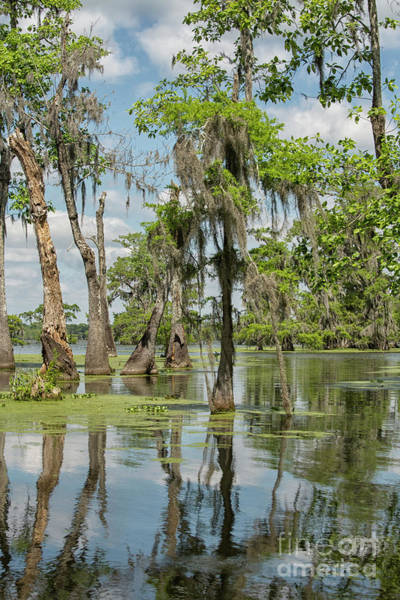 Wall Art - Photograph - Swamp Landscape by Patricia Hofmeester