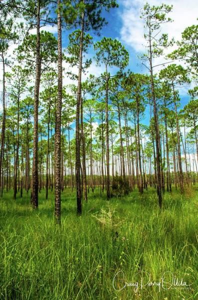 Swamp Trees Art Print