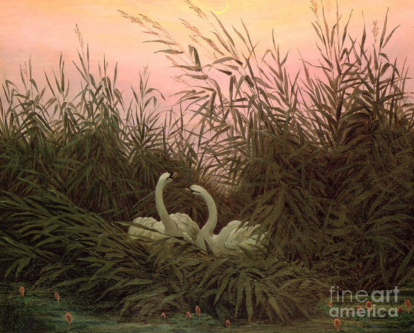 Wall Art - Painting - Swans In The Reeds by Caspar David Friedrich