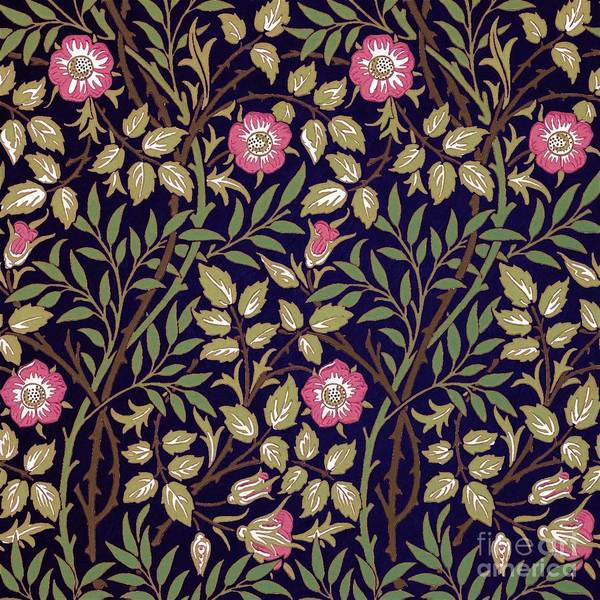 Wall Art - Painting - Sweet Briar by William Morris