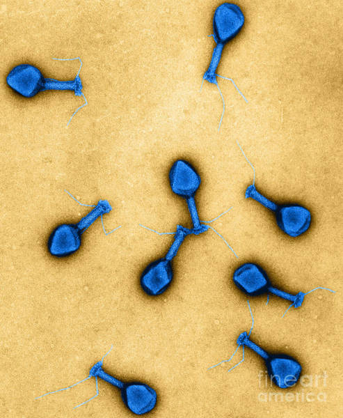 Wall Art - Photograph - T4 Bacteriophages, Tem by Lee D. Simon