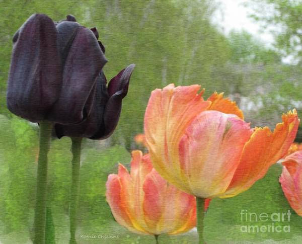 Photograph - The Beauty Of Nature by Kathie Chicoine