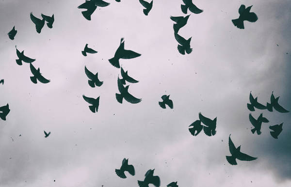Wall Art - Photograph - The Birds by Martin Newman