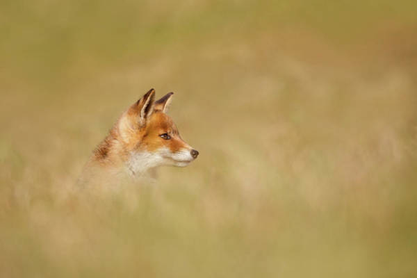 Wall Art - Photograph - The Catcher In The Grass by Roeselien Raimond