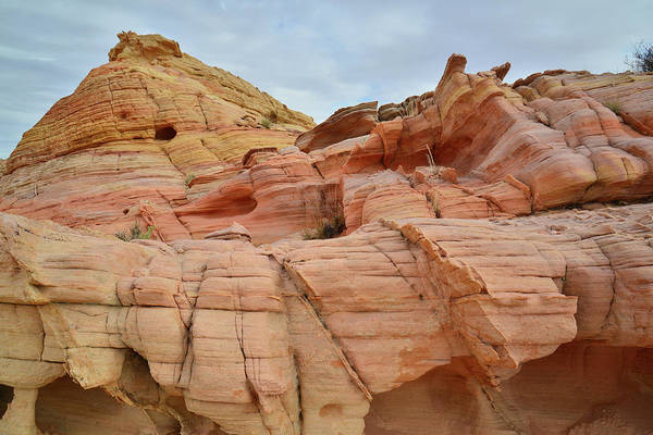 Photograph - The Color Of Valley Of Fire by Ray Mathis