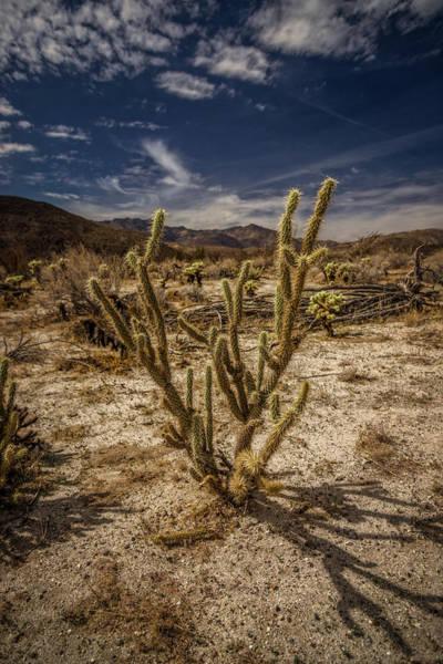 Ocotillo Wall Art - Photograph - The Desert by Peter Tellone