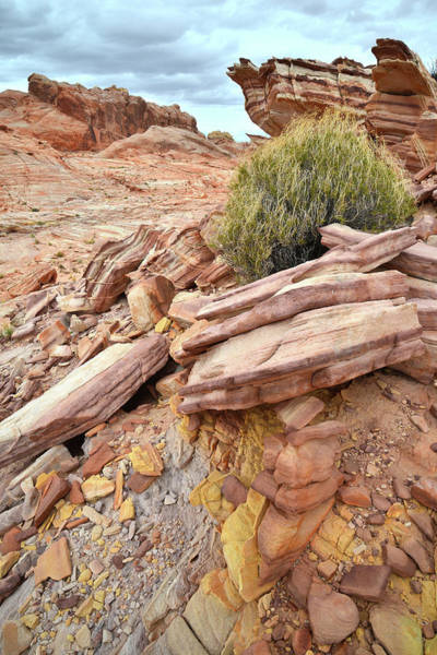 Photograph - The Many Colors Of Valley Of Fire by Ray Mathis
