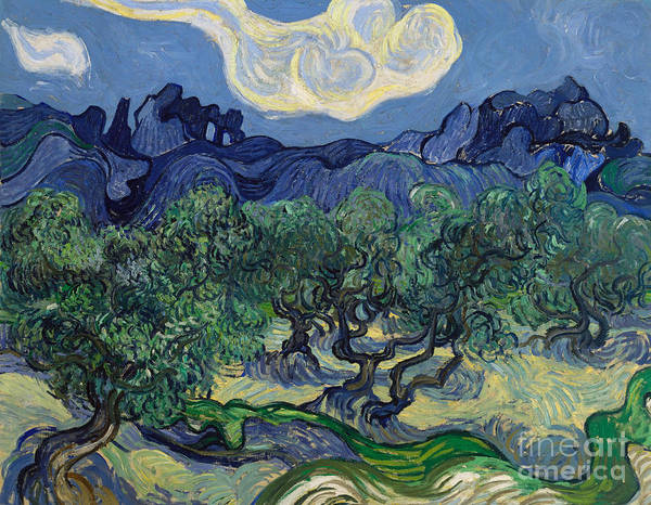 Wall Art - Painting - The Olive Trees, 1889 by Vincent Van Gogh