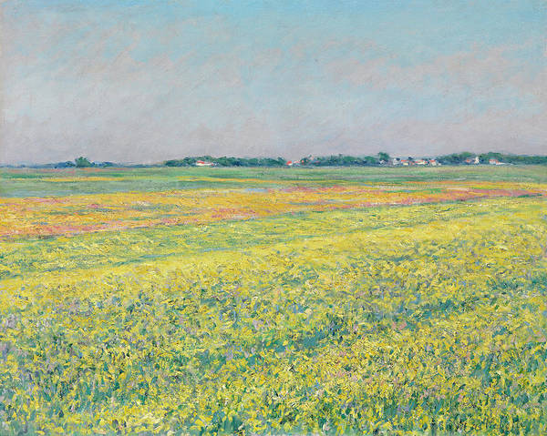 Wall Art - Painting - The Plain Of Gennevilliers, Yellow Fields by Gustave Caillebotte