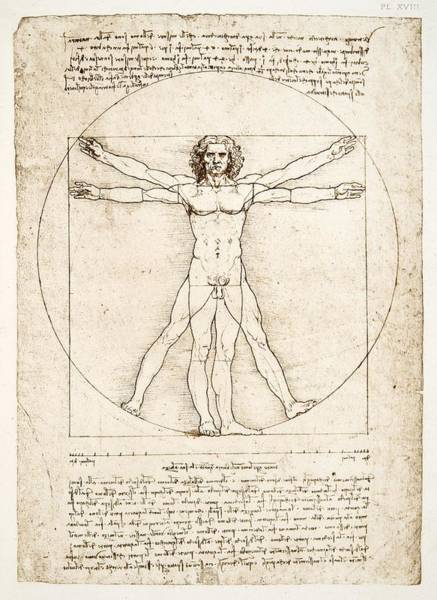 Drawing Painting - The Proportions Of The Human Figure by Leonardo Da Vinci