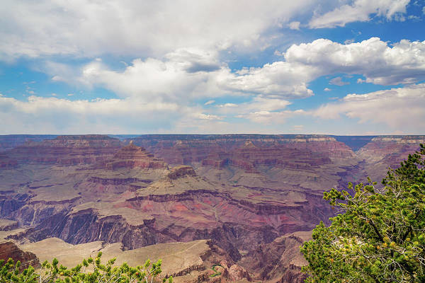 Summer Wall Art - Photograph - The South Rim by Ric Schafer