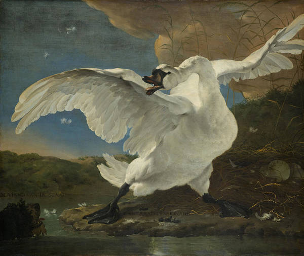 Cygnet Wall Art - Painting - The Threatened Swan by Jan Asselijn