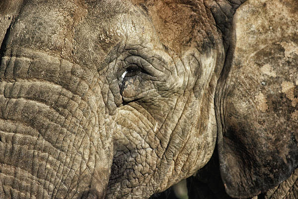 Wall Art - Photograph - The Wise by Martin Newman