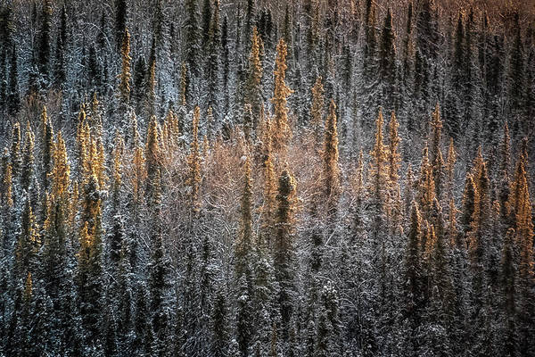 Denali Photograph - Touch Of Winter by Robert Fawcett