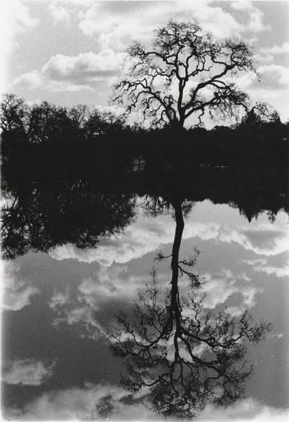 Tree Reflection Sebastopol Ca, Art Print