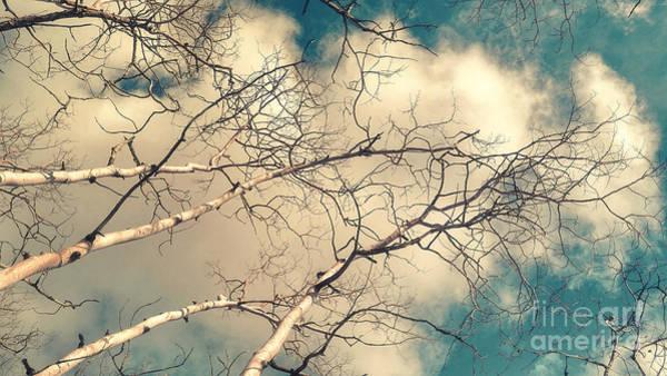 Leafless Tree Wall Art - Photograph - Tree Tops 5 by Priska Wettstein