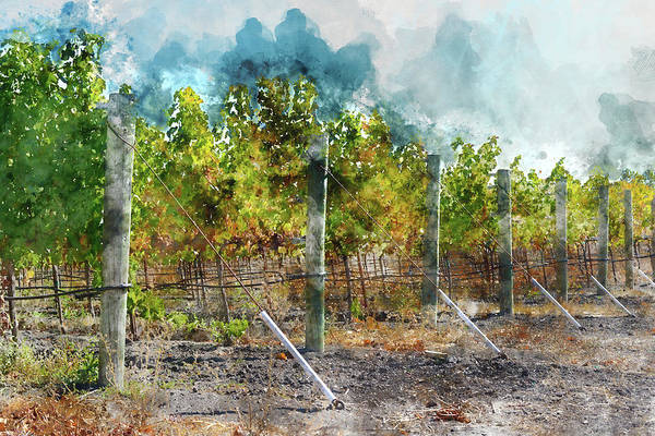Photograph - Vineyard In Autumn by Brandon Bourdages