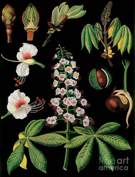 Wall Art - Painting - Vintage Botanical by Mindy Sommers