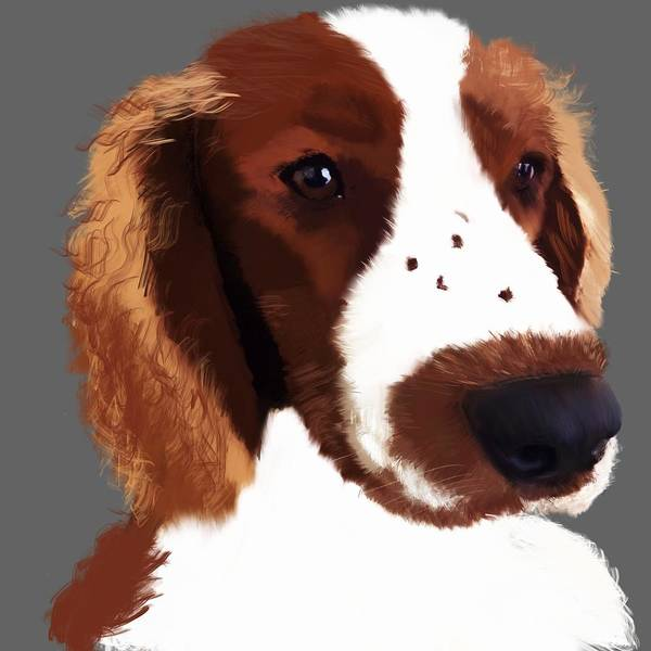 Welsh Springer Spaniel Painting - Welsh Springer Spaniel Art by Karen Harding