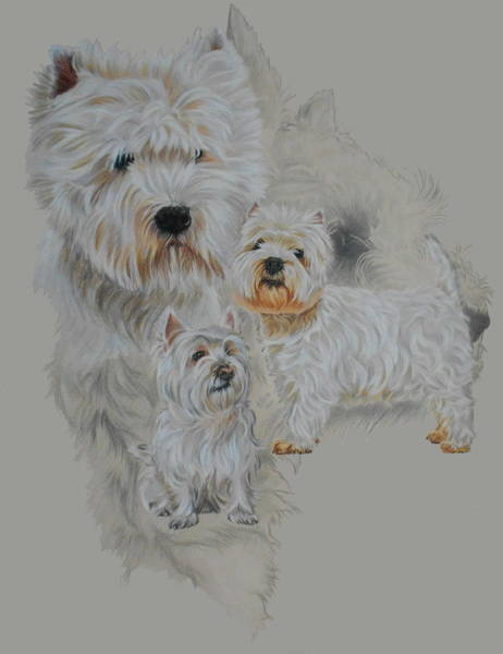 Drawing - West Highland White Terrier Revamp by Barbara Keith