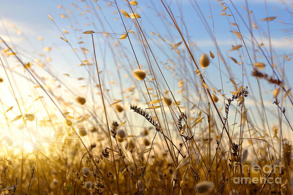Natural Light Photograph - Wild Spikes by Carlos Caetano