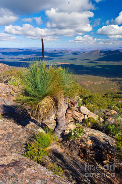 St. Mary Photograph - Wilpena Pound  by Bill  Robinson