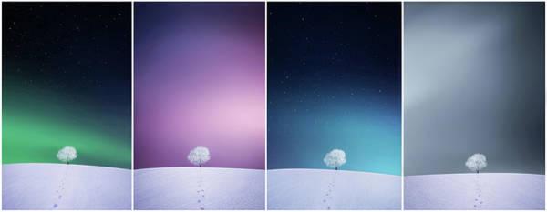 Ski Tracks Wall Art - Photograph - Winter Tree by Bess Hamiti