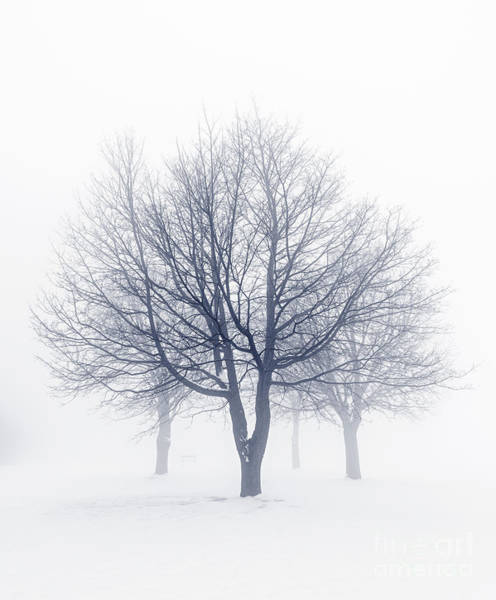 Winter Holiday Photograph - Winter Trees In Fog by Elena Elisseeva