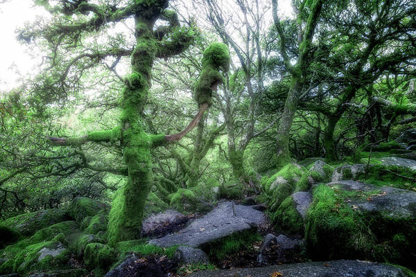 Wall Art - Photograph - Wistman's Wood - Dartmoor by Joana Kruse