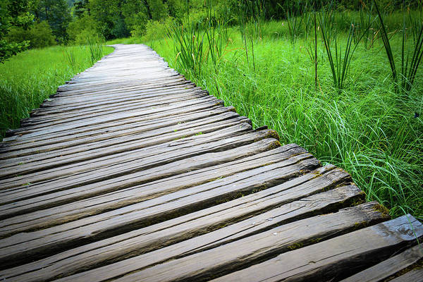 Photograph - Wooden Boardwalk Hiking Trail by Brandon Bourdages