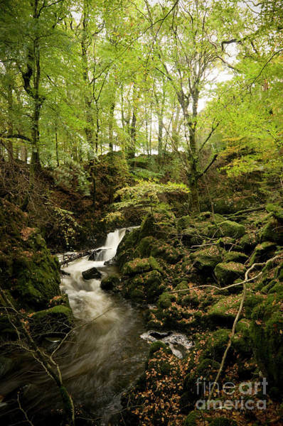 Photograph - Woodland And Stream, At Torrent Walk , Dolgellau by Keith Morris