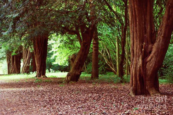 Wall Art - Photograph - Woodland Scene by Tom Gowanlock