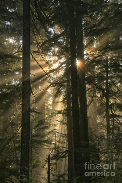 Photograph - Sol Duc Sunbeams by Adam Jewell