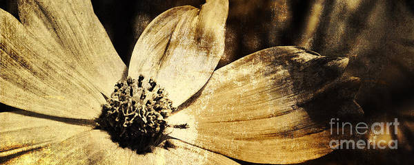 Photograph - Yesterday's Flower by Pam  Holdsworth