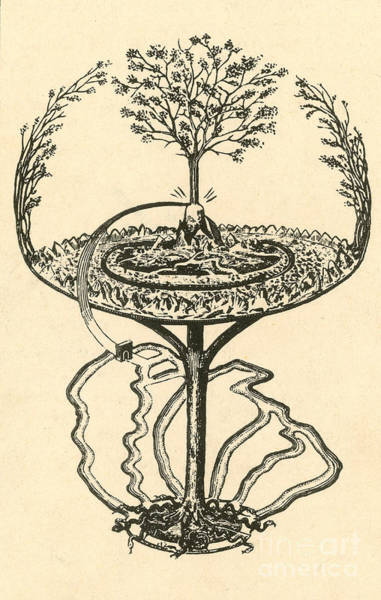 Yggdrasil Photograph - Yggdrasil From Norse Mythology by Photo Researchers