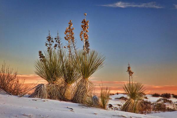 Yucca Elata Wall Art - Photograph - Yucca Sunset by Diana Powell